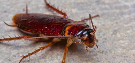 facts-about-cockroaches1